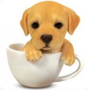 LABRADOR IN A TEA CUP MONEY BOX(SO)