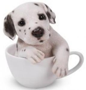 DALMATION IN A TEA CUP MONEY BOX(SO)